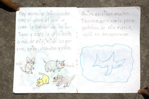 drawing_tiburon0063